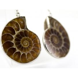 Ammolite fosil - náušnice